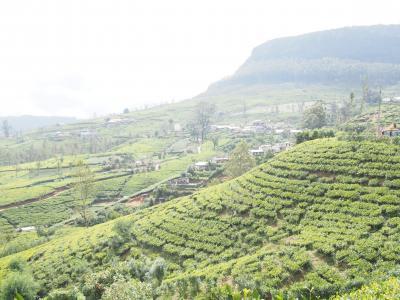 山に癒され紅茶を飲み、スリランカの人々に触れる