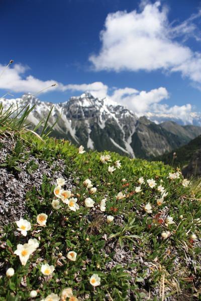2013年 チロルアルプス花紀行 憧れの農家民宿で過ごす1週間 【6】美しいシュトゥバイタールの山々と高山植物