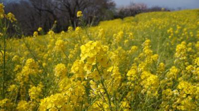 ●吾妻山公園から大磯へ
