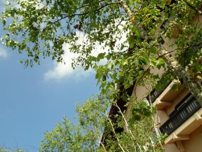 涼しい風を求めてNO3「2013年8月ひるがの高原」
