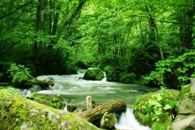 美しい散歩道「奥入瀬渓流」の美しすぎる撮影スポット