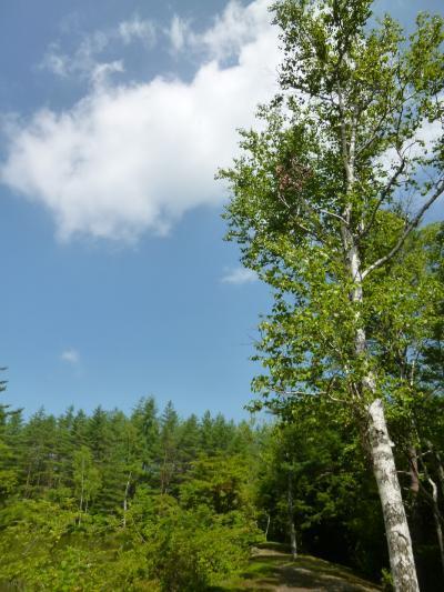優雅な避暑 浅間高原♪ Vol9 ☆浅間高原:美しい風景の中を優雅に歩く♪