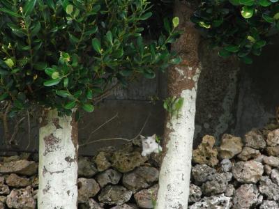 八重山諸島島巡りで自然に癒されおいしいものを満喫する旅(波照間島編)