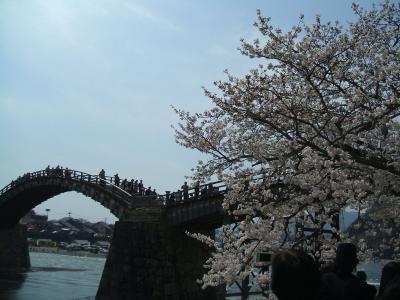 桜のシーズンの錦帯橋