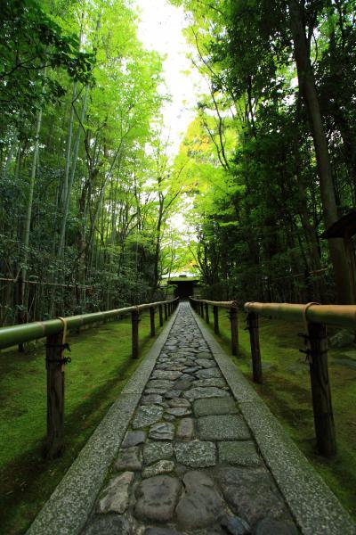 京都 夏の社寺めぐり~大徳寺 高桐院、今宮神社、蓮華寺