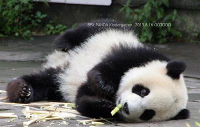 香港・マカオ・台北・成都・雅安のパンダさんを訪ねて(全体)