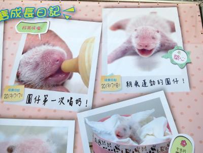 香港・マカオ・台北・成都・雅安のパンダさんを訪ねて(台北編)