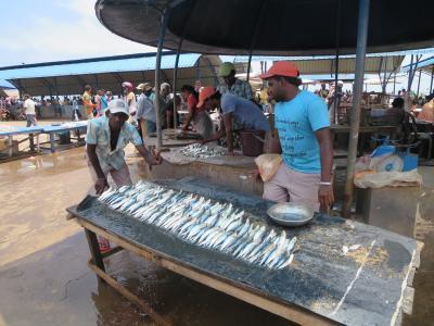 ローカルフィッシュマーケット(スリランカ最大)