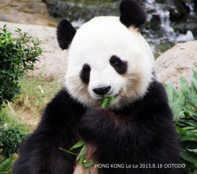 香港・マカオ・台北・成都・雅安のパンダさんを訪ねて(香港編)