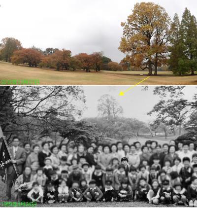 新宿御苑、55年前の初めての遠足の記憶は蘇らず