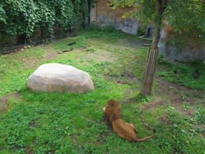 北海道あちこちドライブ ④ 旭川 旭山動物園