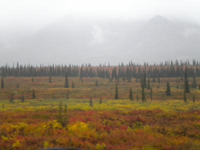 直行便で行く秋のアラスカツアー 3日目・アラスカ鉄道でデナリへ