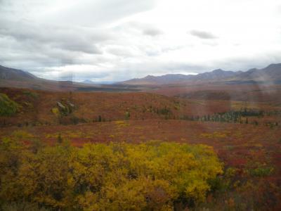 直行便で行く秋のアラスカツアー 4日目・デナリ国立公園観光とチナ温泉へ