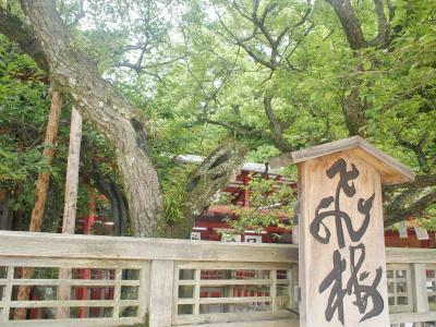 太宰府天満宮から九州国立博物館へ