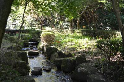 馬場花木園、東高根森林公園 神奈川9月の花巡り