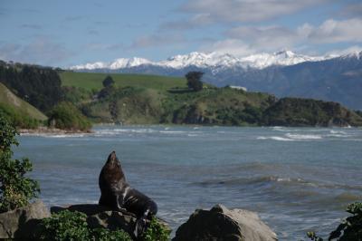 ニュージーランド旅行(カイコウラ)