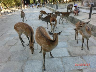奈良公園へドライブ