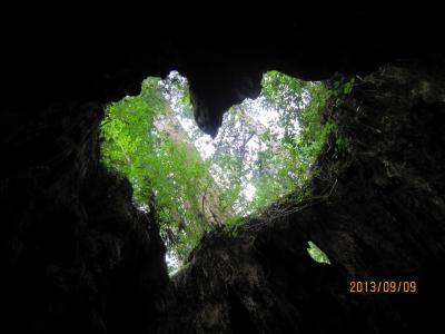世界自然遺産の屋久島を車でドライブ(&登山)