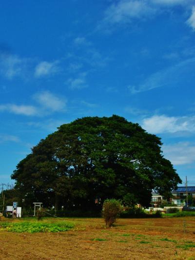 新京成Walk2/3 習志野命名碑・藤崎堀込貝塚・旧大沢家住宅 ☆森林公園を抜けて