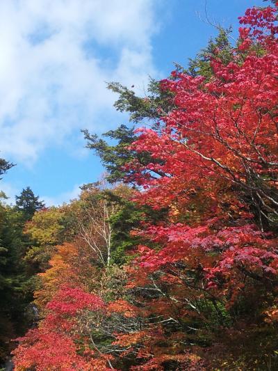 奥日光 紅葉は始まってました。