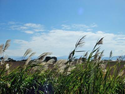 会津から越後へ 秋を探しにミニ旅行! 磐梯山の裾野を彩る稲穂の波と、北の国からやって来た白鳥の舞姿 ワーイ♪・.。*・.。*