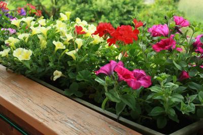 2013年 チロルアルプス花紀行 憧れの農家民宿で過ごす1週間 【11】ベランダガーデニングとお庭、野辺の花
