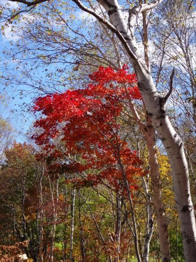 秋色キャンバスの『奥志賀高原』・・・ 『フェニックス』でリラックス♪