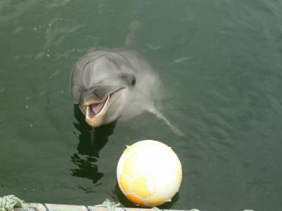 日間賀島のイルカとあそぼう