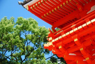 京都・祇園から八坂さん、青蓮院
