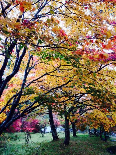 紅葉と温泉、これ最高。2013 ーその2ー