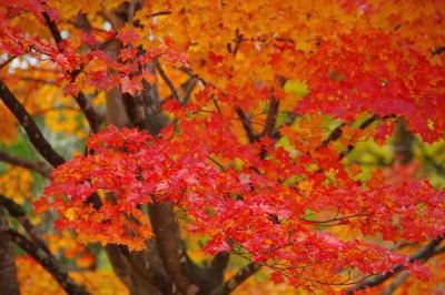 八ヶ岳山麓の紅葉