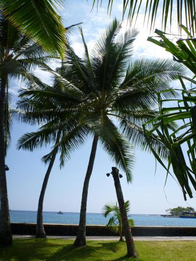 4回目のハワイ島はレンタカーで廻りました。①ハワイ島の南でトローリング
