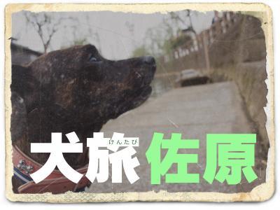 犬旅 ~佐原~
