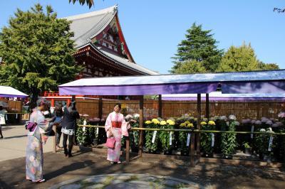浅草寺の菊まつりを観に行く