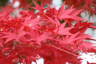 688上杉神社(松が峰公園)周辺散策 山形県米沢市 米沢市内散策パート2
