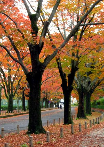 京都の秋 2013  紅葉を探して・・・4. 植物園~夕暮れの賀茂川