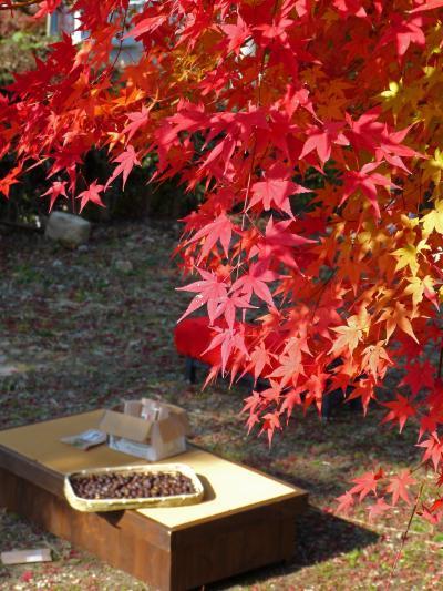 関西の奥座敷☆太閤さんの愛した有馬の湯と紅葉を巡る旅♪