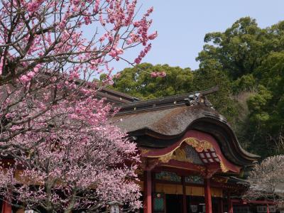 大宰府・熊本・島原・長崎・嬉野・武雄 お城と温泉と猫を訪ねて