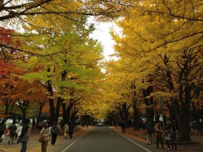 子連れde紅葉の札幌~層雲峡~北見 1泊2日で楽々往復★