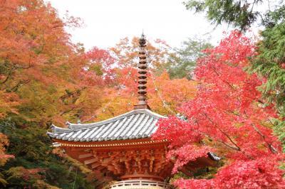 大阪 岸和田 牛滝山 大威徳寺の紅葉を訪ねて