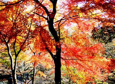 前日の雨のリベンジで塩原温泉の紅葉を満喫しました。