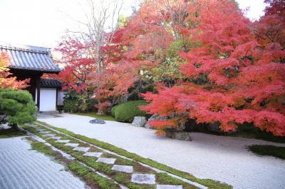 秋の京都へ・天授庵、無鄰菴編