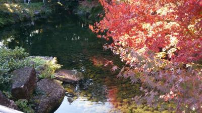 紅葉の徳川園