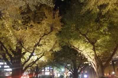 夜の銀杏並木見学