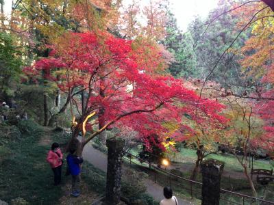 東郷神社のもみじ祭りで紅葉真っ盛り