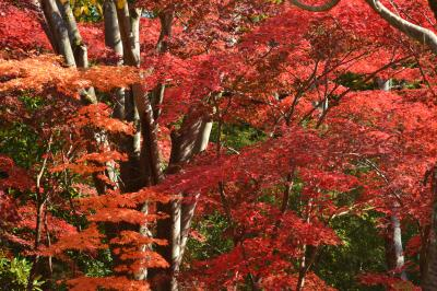 2013年 11月23日 川崎市 日本民家園の紅葉