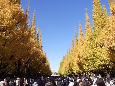 神宮外苑いちょう祭りへ