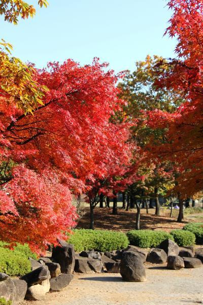 亀戸中央公園の紅葉を愛でる