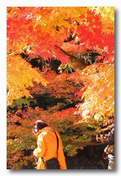Solitary Journey [1291] 特別史跡「旧閑谷学校」で紅葉狩り~紅葉観賞編~<岡山県閑谷・兵庫県龍野への車旅>岡山県備前市