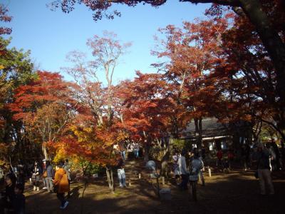 長岡市の紅葉散策